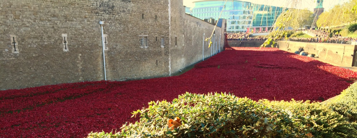 Poppy carpet