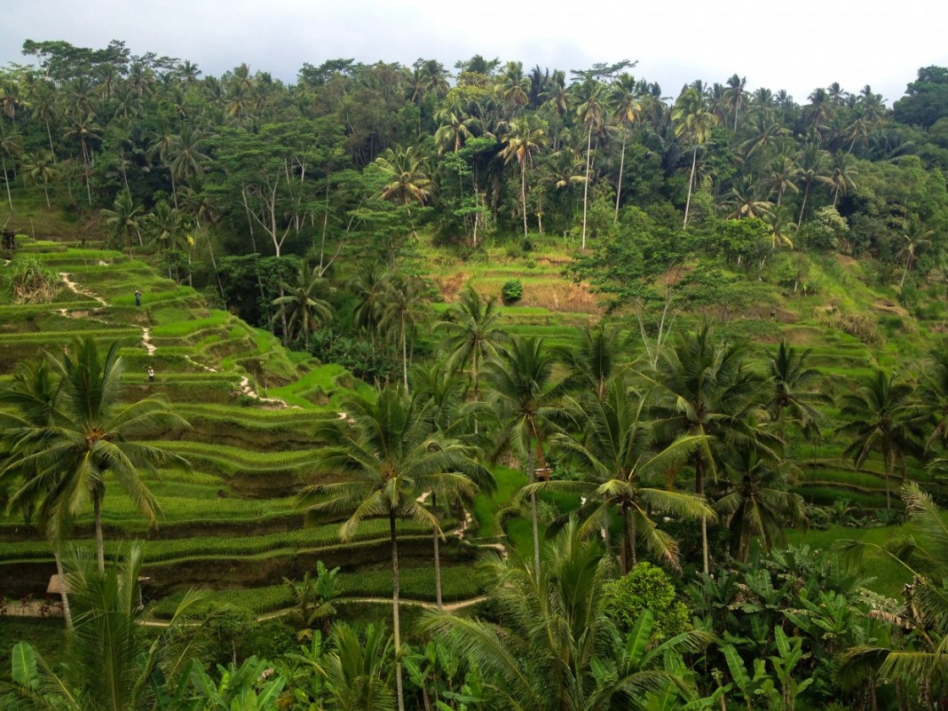 Tegalalang Rice terraces in Bali