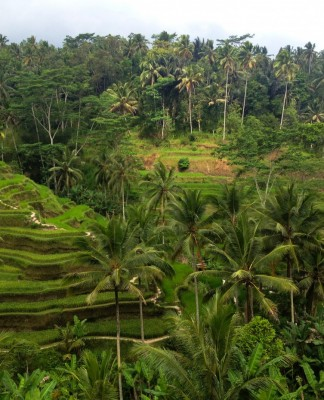 Tegalalang Rice terraces in Bali