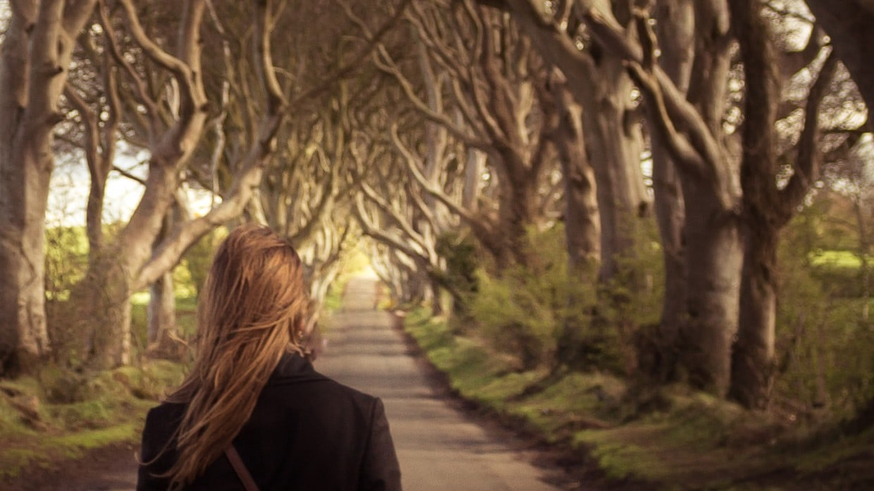 Close-up Dark Hedges