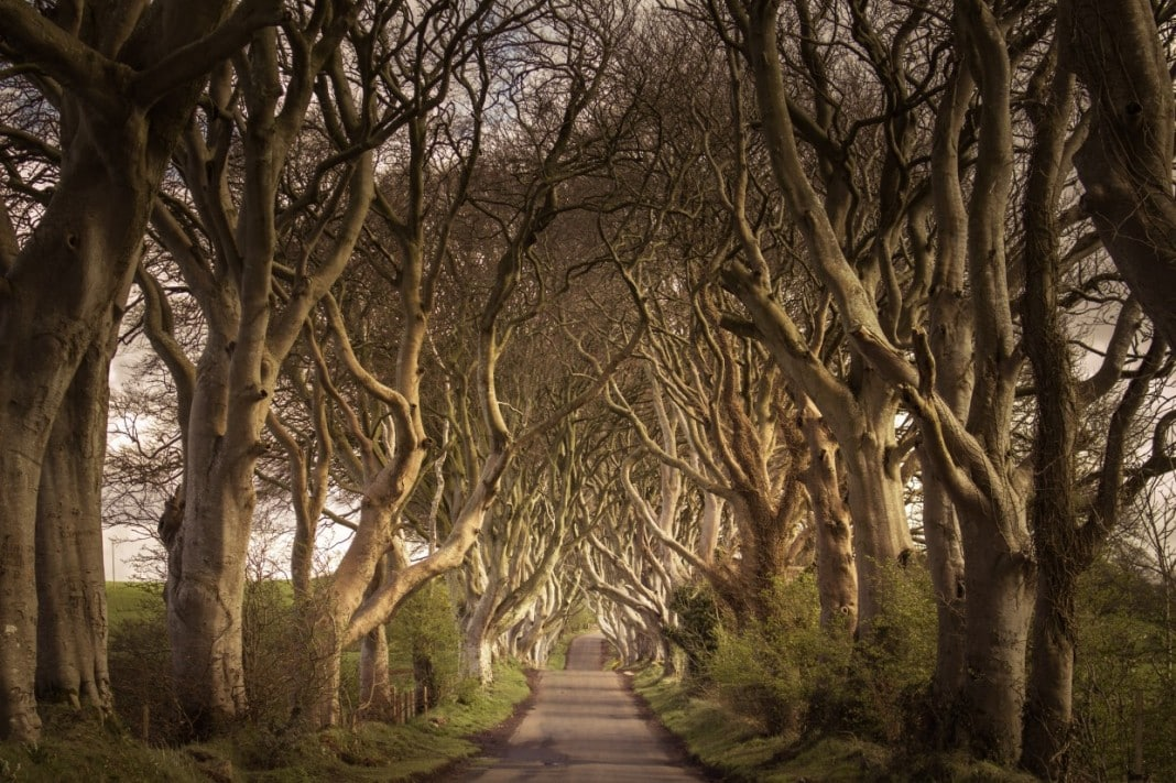 https://www.nonstopdestination.com/wp-content/uploads/2015/05/dark-hedges-northern-ireland-1068x711.jpg