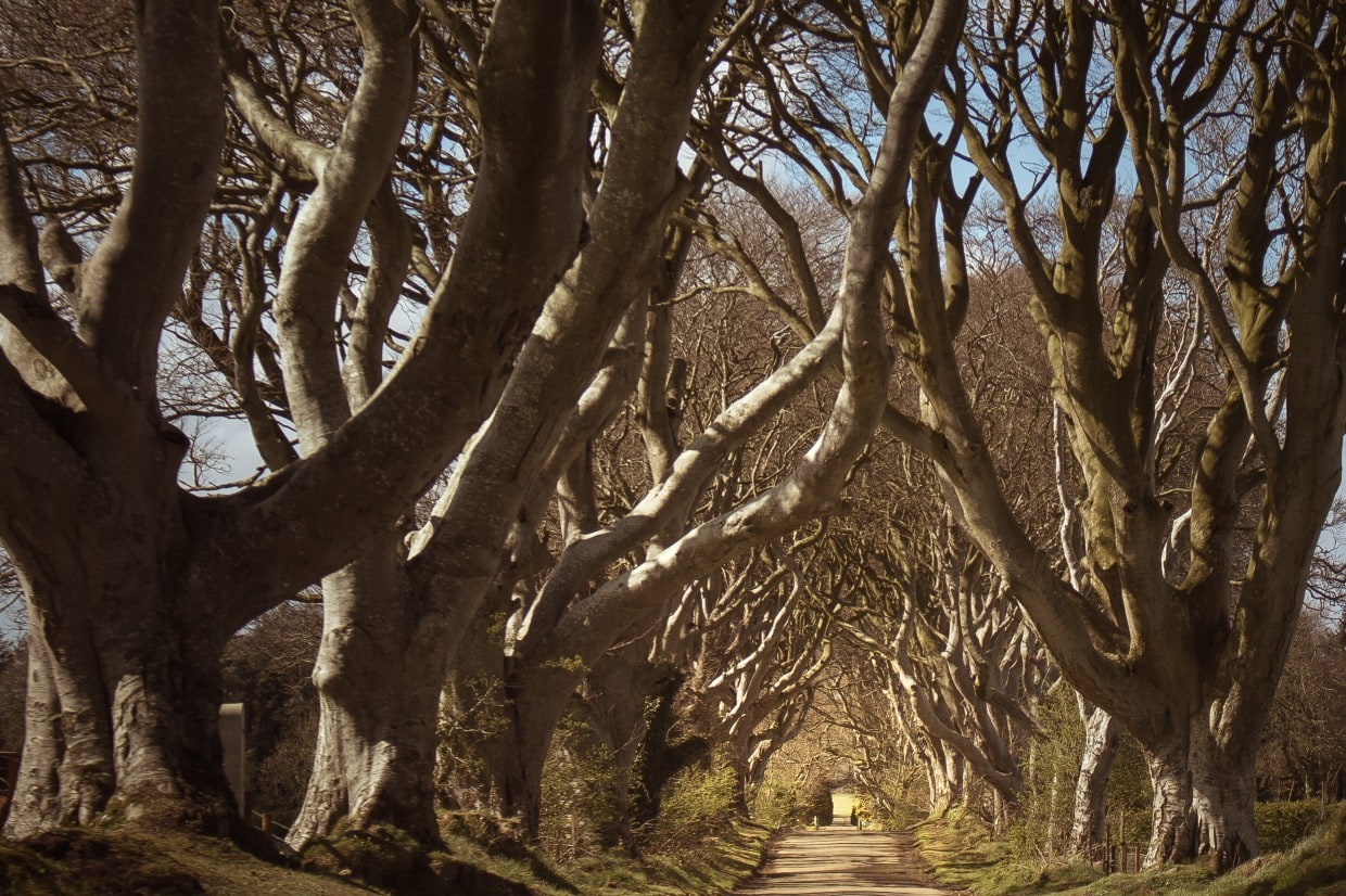 Dark Hedges with road