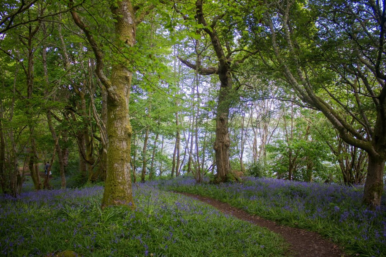 Inchmahome Priory trees, Scotland