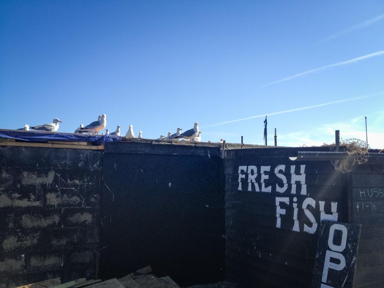 Seagulls, Hastings