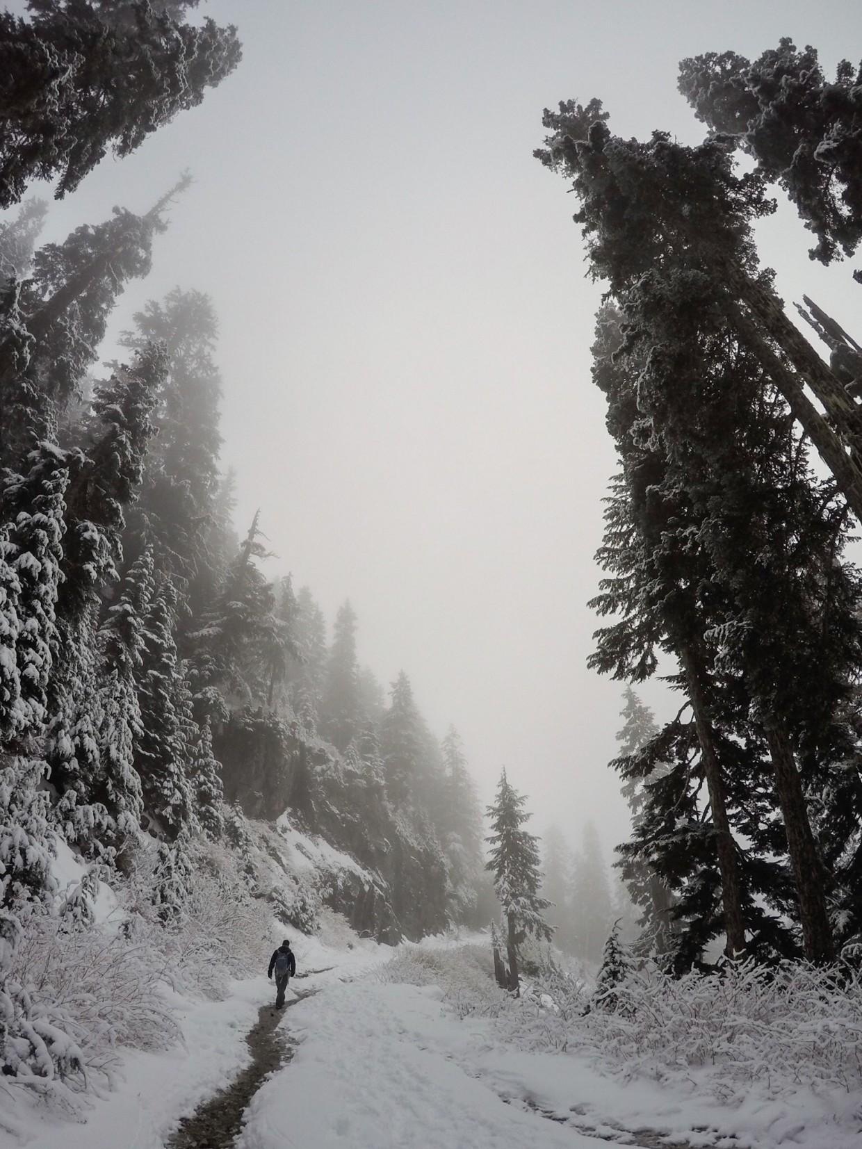 Path on Grouse Mountain