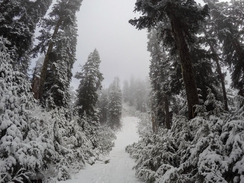 Path on Grouse Mountain, Canada