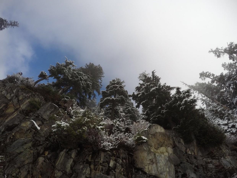 Trees on Grouse Mountain