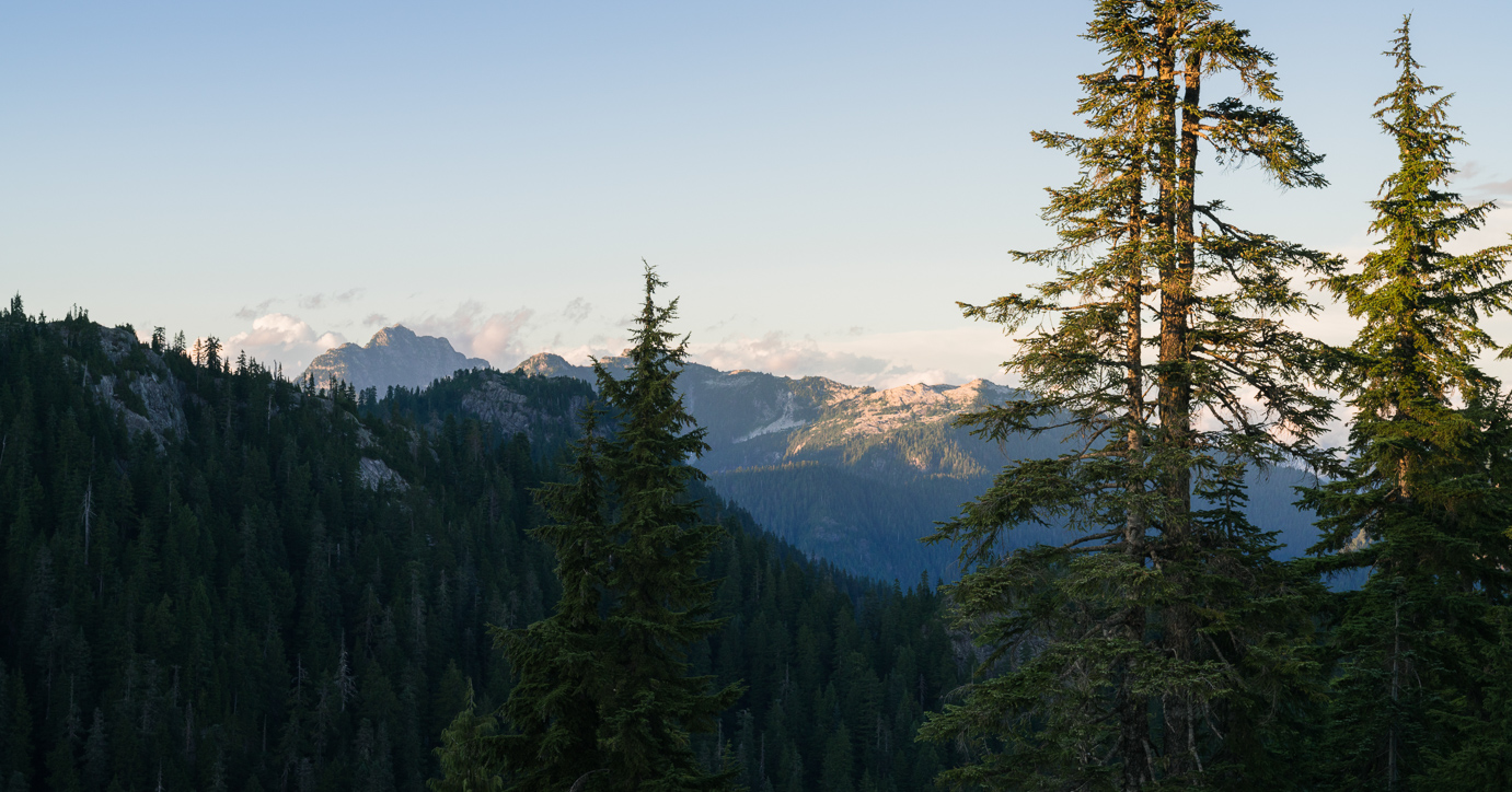 Old growth forest Grouse Mountain top 7 things to do in Vancouver