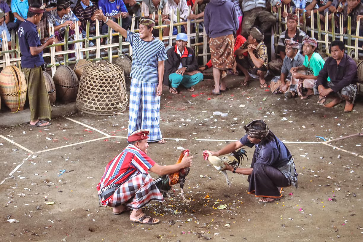 Balinese Cockfight