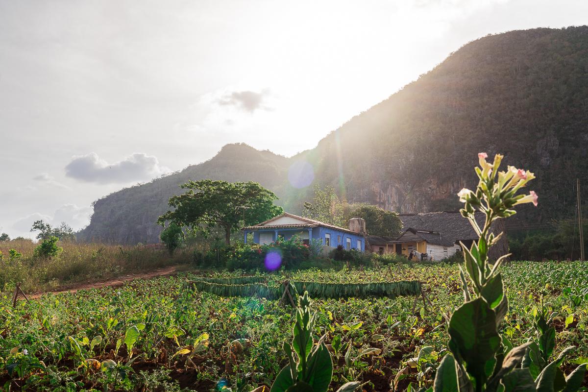 Vinales tobacco plantation 2 week Cuba itinerary
