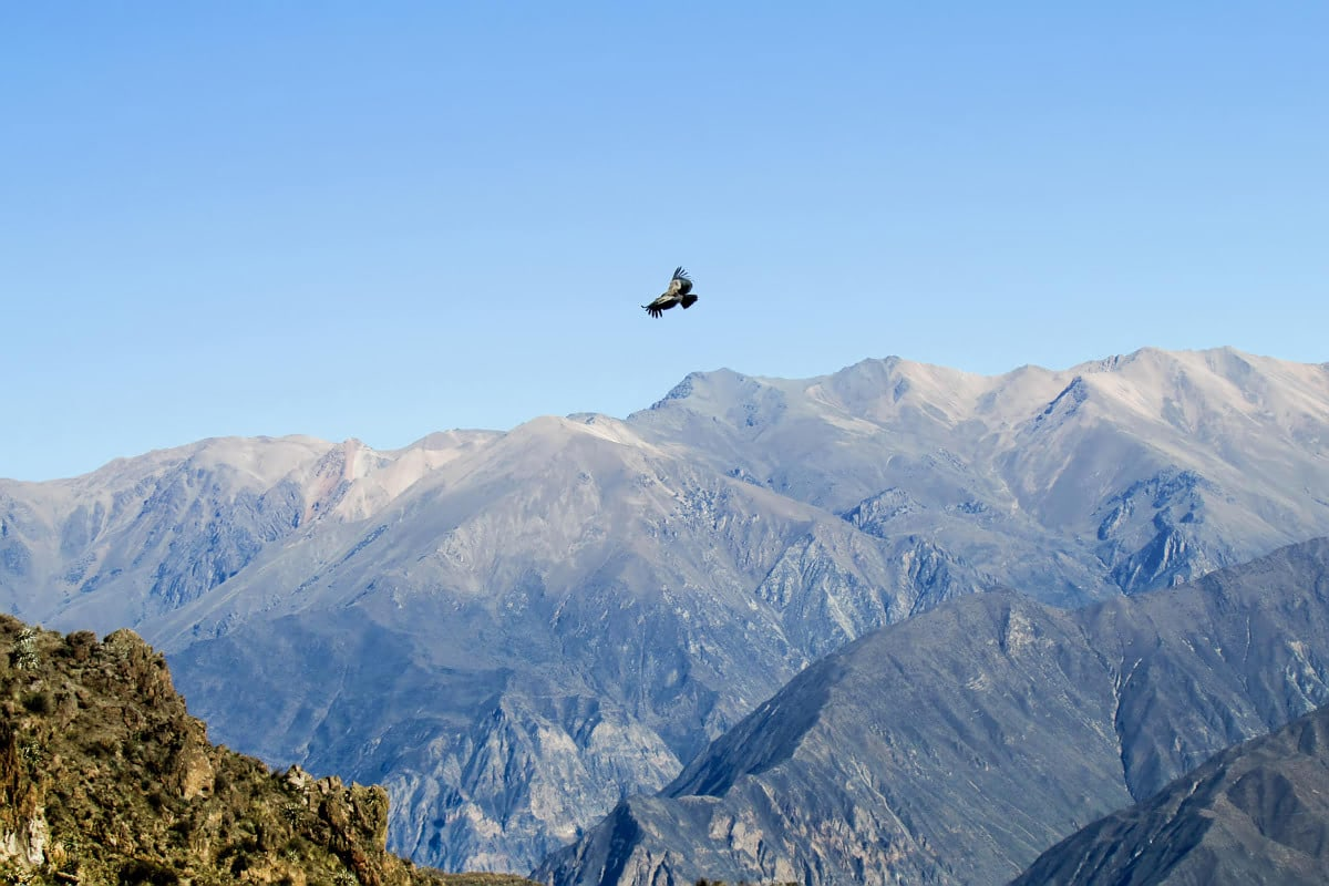 Colca Canyon 2 day tour
