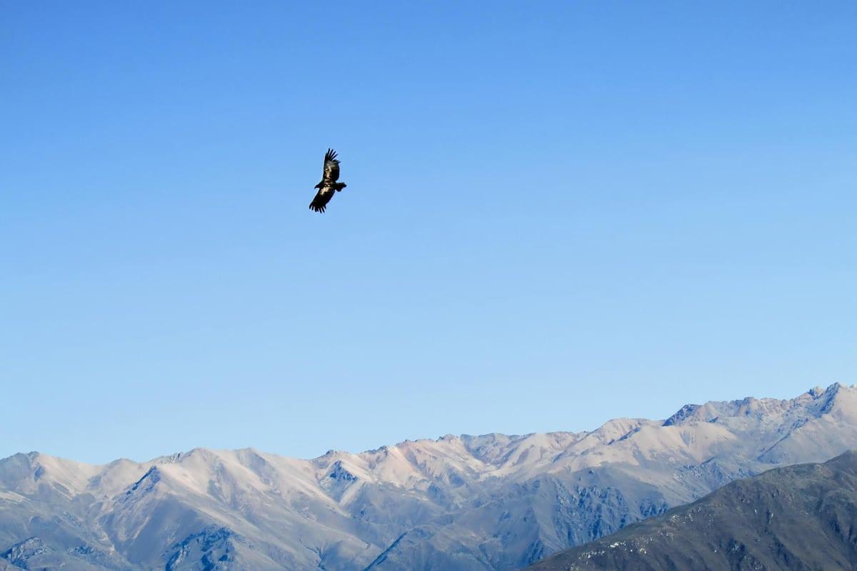 Condor Colca Canyon Trekking