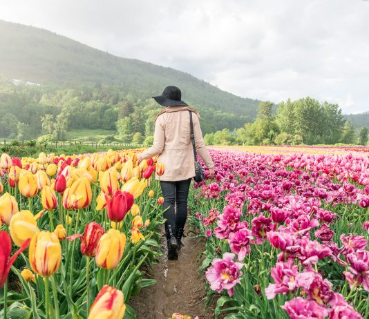 Bloom Tulip Festival Abbotsford