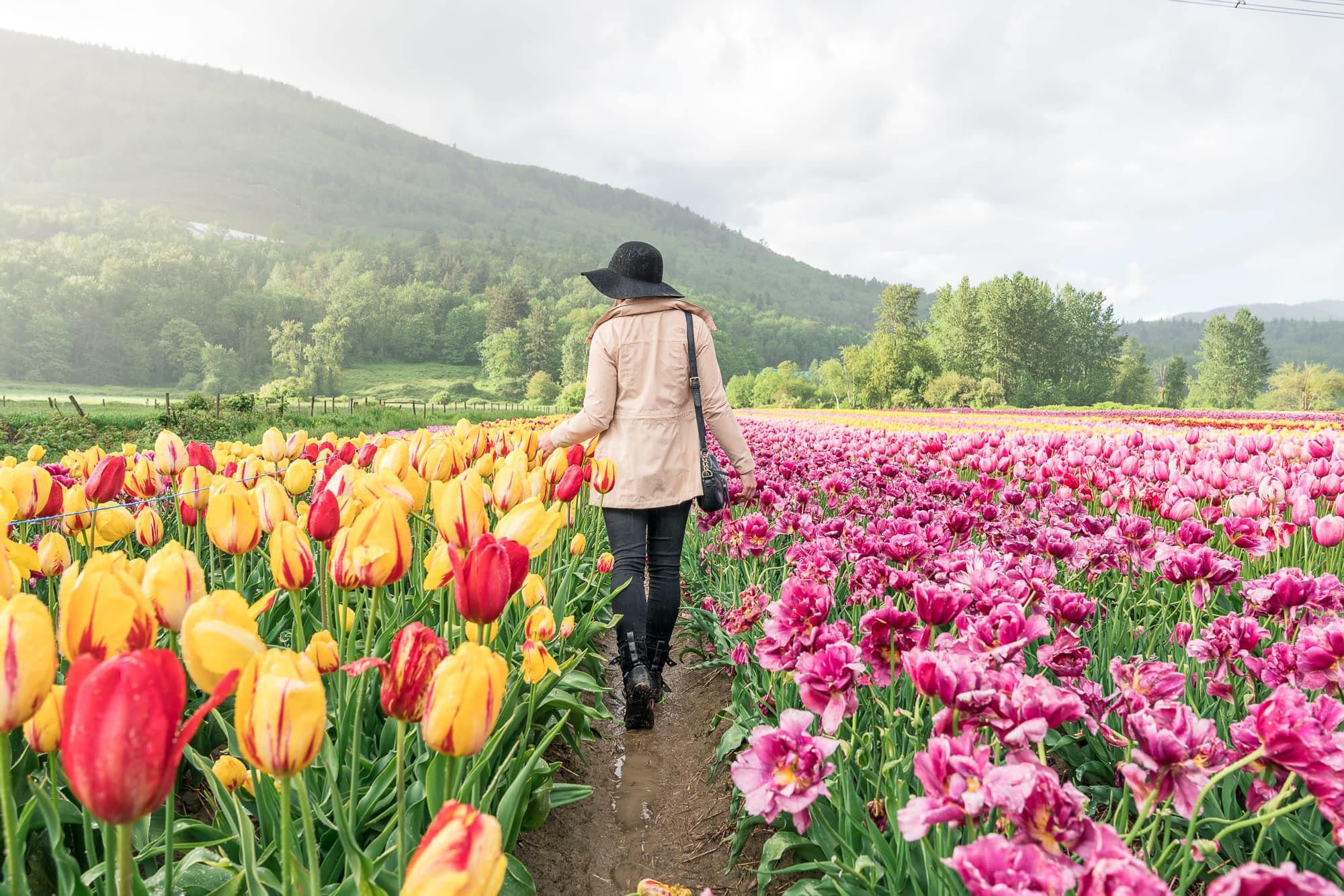 Stroll among a sea of colours: Tulip Festival near Vancouver