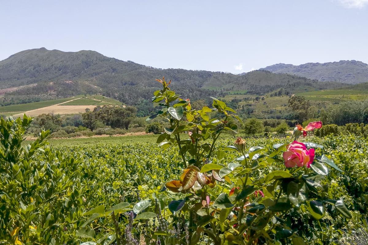 Dunstone winery
