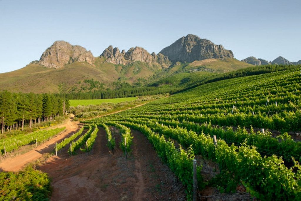 Lourensford vineyards near Cape Town