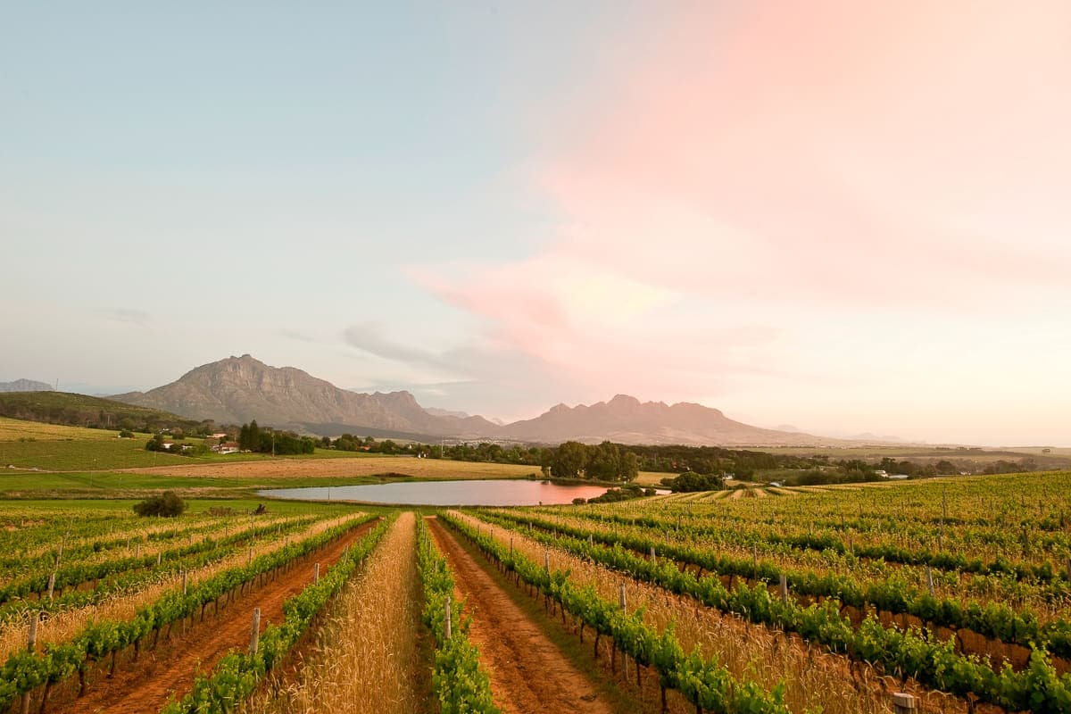 Middelvlei landscape - wine farms near Cape Town