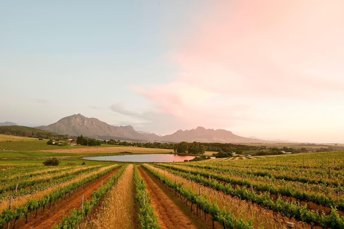 Middelvlei landscape - wine farms near Cape Town