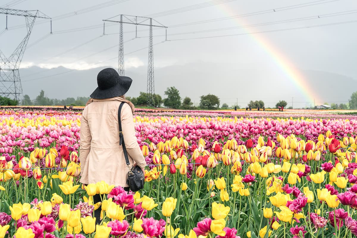Bloom tulip festival