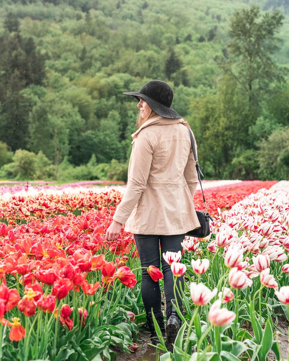 tulip festival vancouver Canada