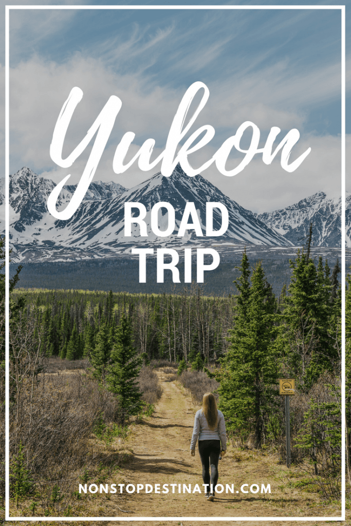Yukon road trip - The Allure of the North - Where to go, where to stay, what to do, wildlife viewing #yukon #canada #roadtrip #spring #trip #wildlife #photography